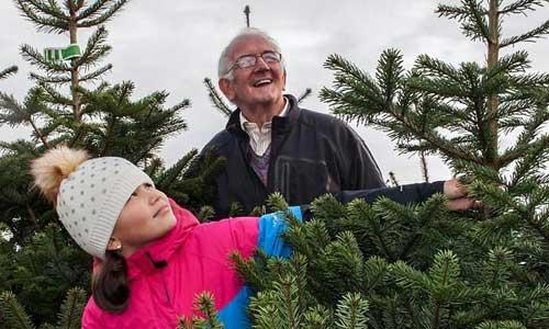 domestic christmas trees
