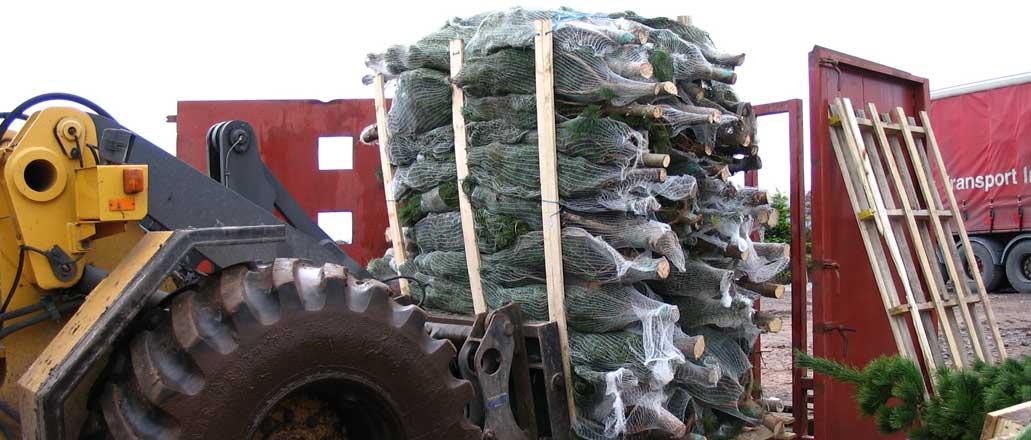 wholesale-trees2